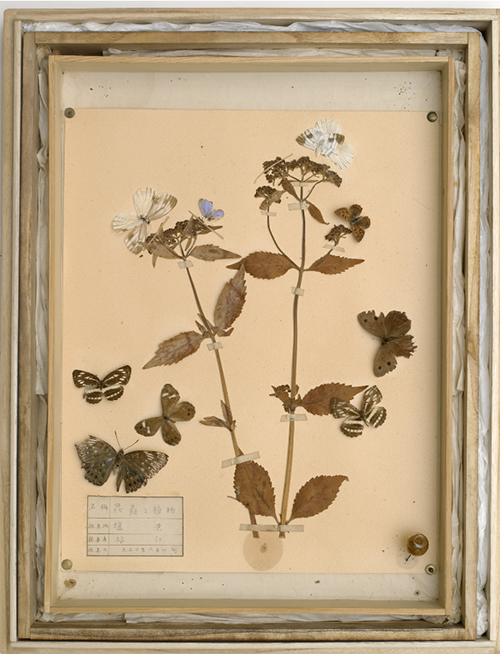 昆虫と植物